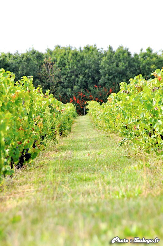 Vendanges_du_Clos_St_Marc_2010_076.JPG